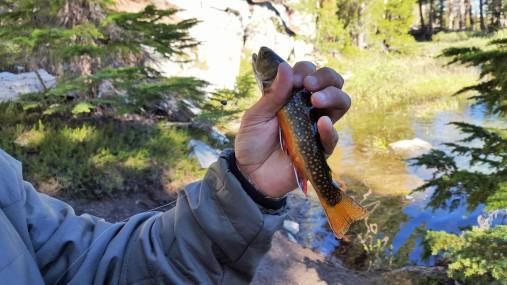 Fishing Mammoth Creek
