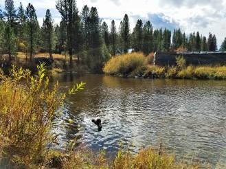 Idaho Oct 2016